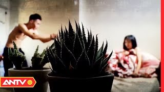 Bài học cảnh giác từ vụ  nữ sinh bị võ sư thú tính xâm hại | ANVCS | ANTV - YouTube