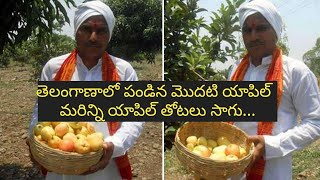 Telangana first Apple- CM KCR to taste it!..