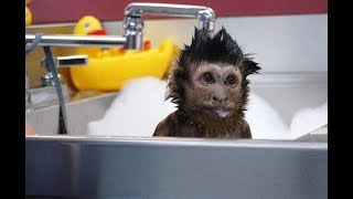 Cute Monkeys Part #76 - Free and Happy time with Funny Monkey Relaxing Bath