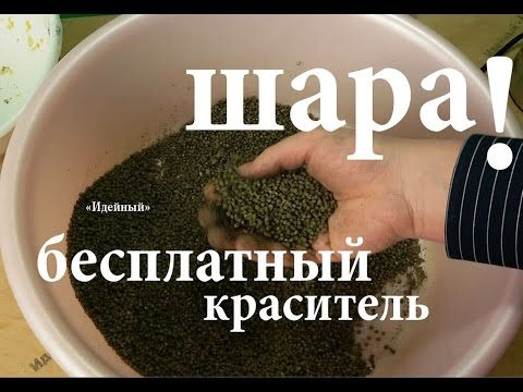 прикормка на плотву своими руками рецепты