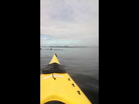 Killer Whale under Kayak kid freaks out