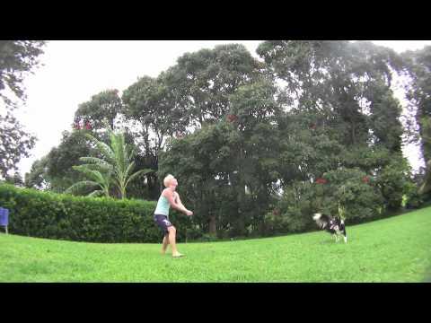 Pas igra odbojku