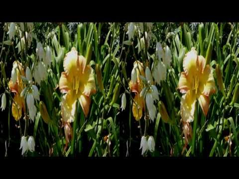 Amazing 3D Lily Gardens Stereoscopic HD (EVO 3D, NEO3DO)