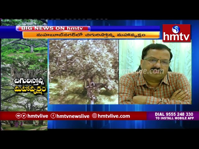 మహబూబ్ నగర్ లో చిగురిస్తోన్న మహావృక్షం  | hmtv Telugu News