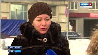 Новосибирский медведь произвел фурор в социальных сетях