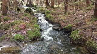 64 ruisseau
