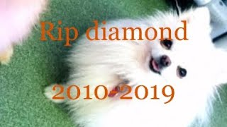 Rip diamond 2010-2019