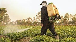 Tòa kháng án cấm bán thuốc trừ sâu độc hại, nói EPA vi phạm luật