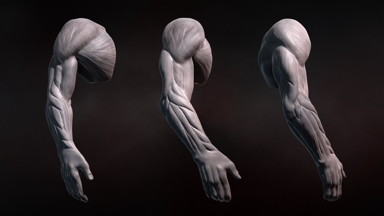 anatomy zbrush arms human sculpting challenge week tutorial weekly references training