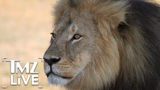 Cecil the Lion's Son Xanda Killed by Trophy Hunters | TMZ Live