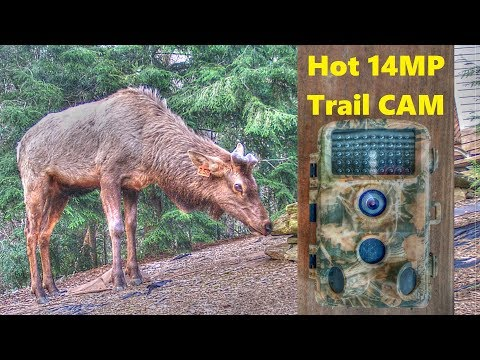 video CamPark T45 Trail Camera review – High quality with low price