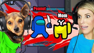 Dogs Play Among Us For the First Time! Imposter IQ 999! PawZam Dog