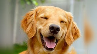 Smarty Dogs Funny Dog Video Compilation 2018