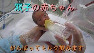 双子の赤ちゃん 頑張ってミルク飲みます