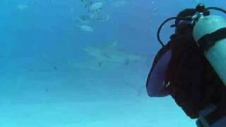 オオメジロザメ16