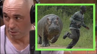 Joe Rogan | Being Charged by a Hippo