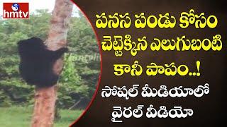 Bear climbs Jackfruit tree, video goes viral..