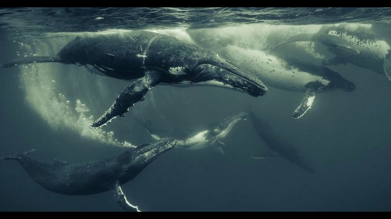 Wildlife and underwater photography with Canon Master ...