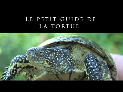 Le petit guide de tortue