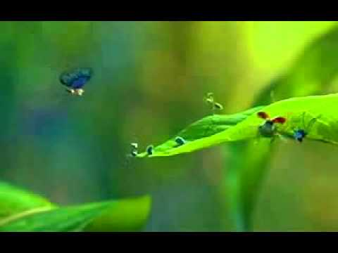 A bugs life 2 full movie youtube : Video de one piece pirate