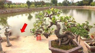 Hoảng hồn phát hiện sự thật trong lúc quay cây cảnh bên hồ nước - Amazed, bonsai and crocodile