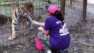 Flea Treating 70+ BIG Cats