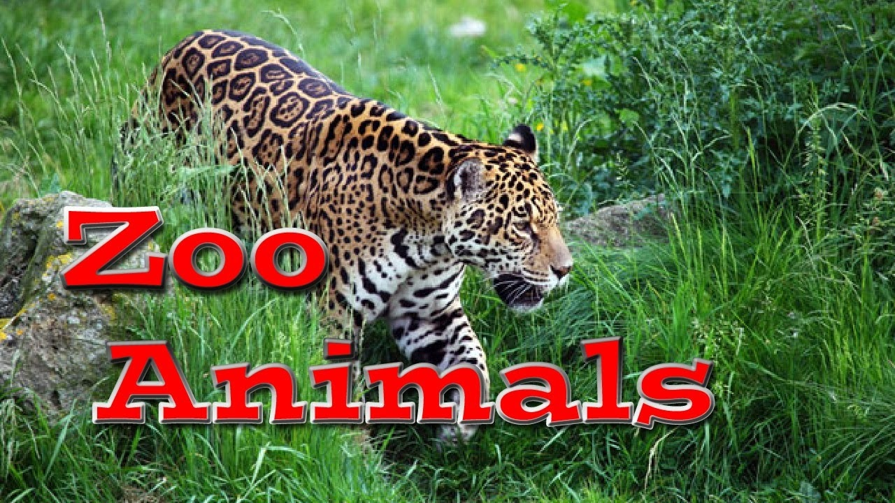 Animal World Zoo Animals For Kids Youtube