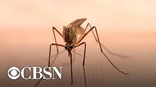 Los casos del virus del Nilo Occidental aumentan en Estados Unidos