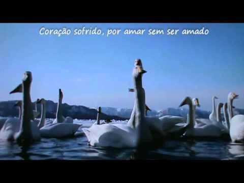Baixar Roberto Carlos - Pássaro ferido