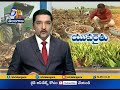 Yielding Great Results with Turmeric Cultivation   Success Story of Nizamabad Young Farmer