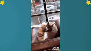 Cute Cats Videos Compilation Cute Moment Of The Cats – Cutest – Funniest Animals! #8