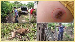 """Khỉ """"lạ"""" tấn công đàn bà, giết gà, phá cây"""