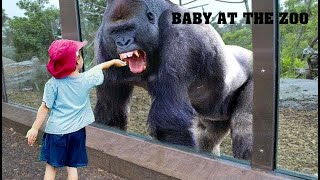 TRY NOT TO LAUGH   Funny Babies At The Zoo  - LAUGH TRIGGER