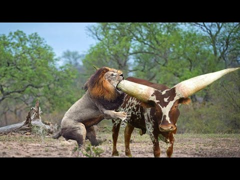 Самые Прожорливые Животные в Мире