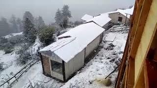 Snowfall in Auli Uttarakhand | First snowfall
