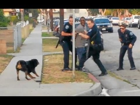 Police Shoot And Kill Dog In Front Of Owner Graphic Video