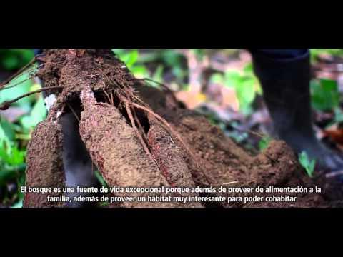 Un bosque de oportunidades en Ecuador - versión corta