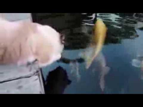 Кошачья рыбалка