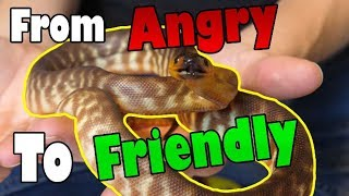 "How to Tame an ""Aggressive"" Snake"