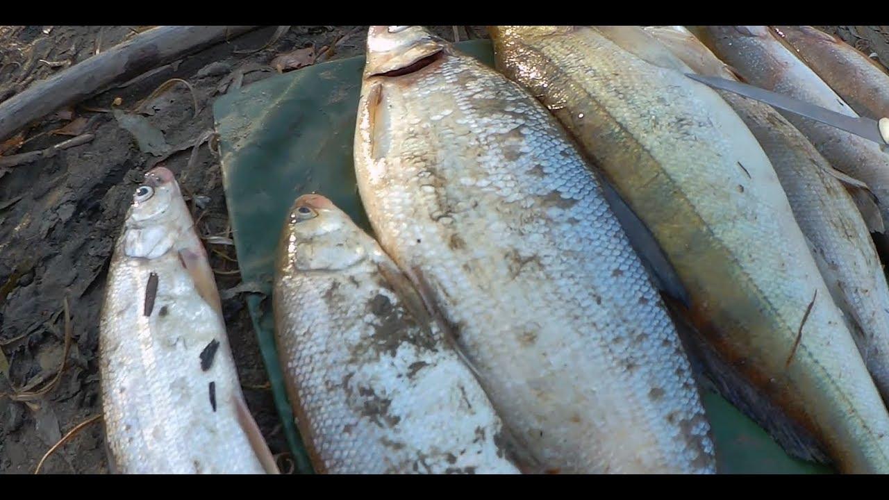 Николаевск на амуре рыбалка
