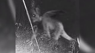 10 Minutes Of Terrifying Demons Caught On Tape!