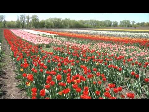 14.04.22 Голландія на Буковині