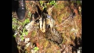 Bigfoot filmed at Bluff Creek 2008...The Story of How We Got this Important Footage