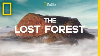 The Lost Forest | Nobel Peace Prize Shorts