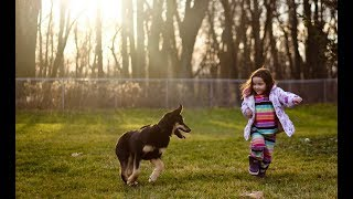 funniest confused pets compilation 2018 | afv funniest fails November 2018 | Baby Kids play with dog
