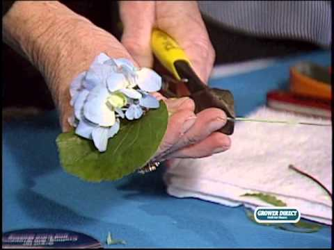 How to make a Hydrangea Boutonniere