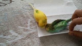 Umotao je mrtvog papagaja u papir. Ono što se desilo u nastavku istopiće vam srce!