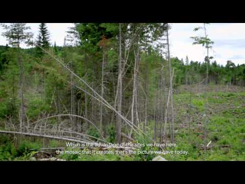 Video: The Positive Impact of Harvesting the Forest