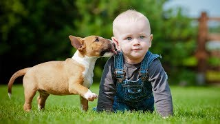 Puppies and Babies Playing Together Compilation Part 3