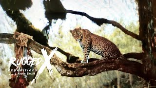 Leopard Hunting at Mt. Galai Tanzania